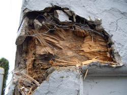 Dry Rot Causing Major Structural Damage